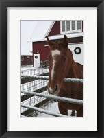 Framed Horse in Winter
