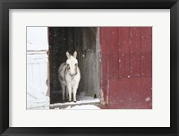 Framed White Pony