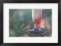 Framed Hummingbird 1