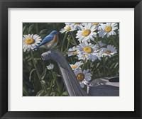 Framed Bluebird Daisies
