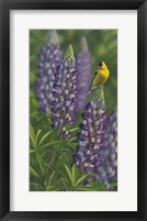 Framed Goldfinch Lupine