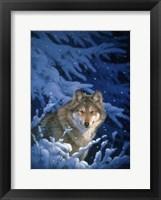 Framed Winter - Snow