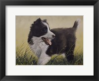Framed Puppy