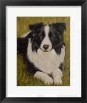 Framed Collie Resting 2