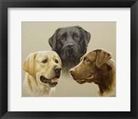Framed Trio