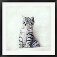 Framed Cat Winks