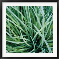 Framed Grass with Morning Dew