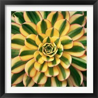 Framed Striped Succulent