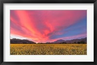 Framed Spring Sunset Napa Valley