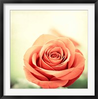 Framed My Perfect Rose