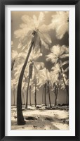 Framed Palm Shadows I