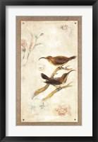 Framed Long-Billed Sunbird