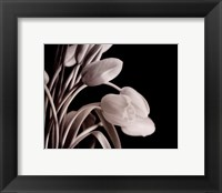 Framed Tulips On Black