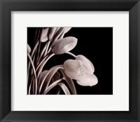 Framed Tulips On Black