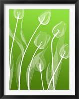 Framed Floral 4