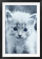 Framed Blue Kitty