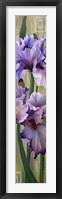Framed Iris I