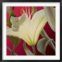 Framed Lily Red