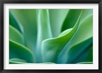Framed Agave 5