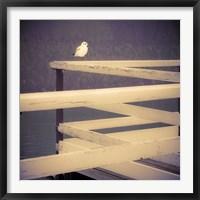 Framed Stillness