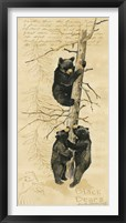 Framed Black Bears