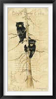 Framed Black Bears Cubs