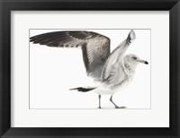 Framed Gull I