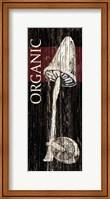 Framed Organic Mushroom