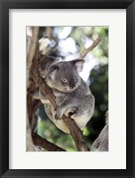 Framed Australia 4