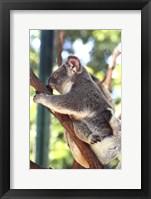 Framed Australia 6
