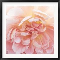 Framed Heavenly Rose