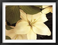 Framed Lily and Leaves