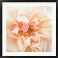 Framed Promise Rose