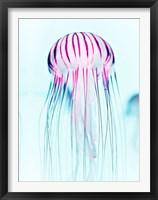 Framed Jelly Fish