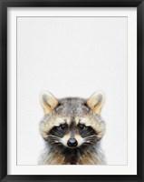 Framed Raccoon