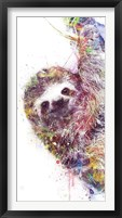 Framed Sloth