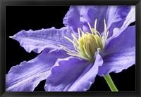 Framed Purple Clematis