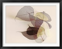 Framed Sauvignon Blanc