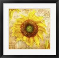 Framed Tuscan Flower 7
