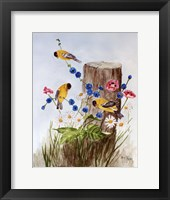 Framed American Goldfinch 3
