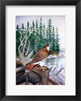 Framed Red Tailed Hawk