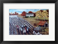 Framed Lincoln Cotton Field