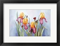 Framed Irises Four