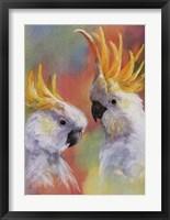 Framed Sulphur-Crested