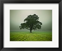 Framed Misty Tree