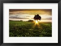 Framed Golden Evening