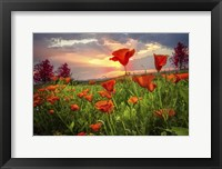 Framed Sunrise Poppies