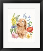 Framed Sunny Bunny I FB