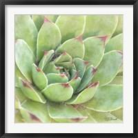 Framed Garden Succulents IV Color