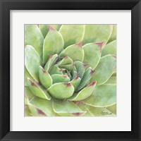 Framed Garden Succulents IV Color